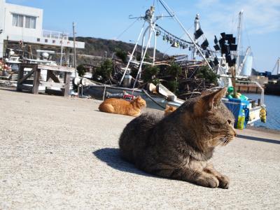 新型コロナウィルス? それがどうした(`ロ´;)マラッカ&福岡紀行 3日目 何故か福岡帰国して猫島へ