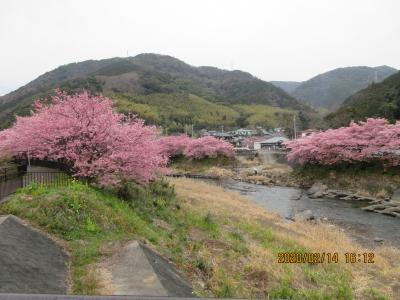 シニアののんびり静岡旅行です。(第一日目;日本平、駿河湾フェリー、河津桜)