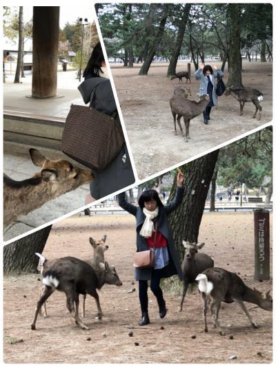 493-3年半ぶりの微熟女三人旅in奈良①…鹿にモテモテの微熟女3人