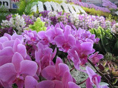 第30回世界らん展 美しい花々