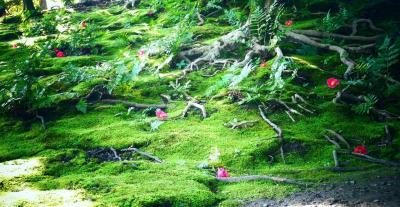 しだれ梅に椿、京都伏見城南宮。それと東寺の弘法さん