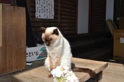 京都☆梅宮大社 猫だ~♪酒だ~♪梅だ~♪