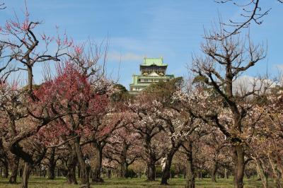 【大阪城梅林】 品種の多さは関西屈指で、開花期間も長い!