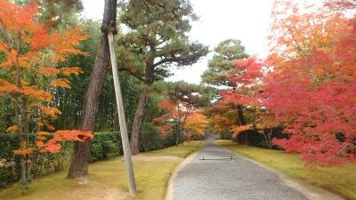京都紅葉八景(8)桂離宮