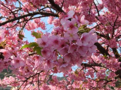 春を感じに伊豆旅行