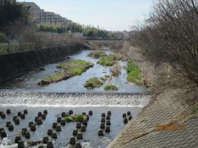 柏市の大堀川・礫間浄化施設