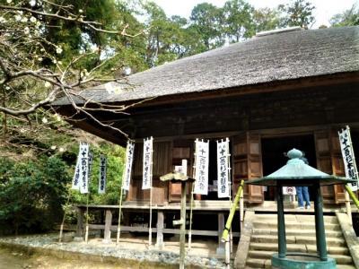 茅葺の杉本寺は紅白梅/椿と苔が♪