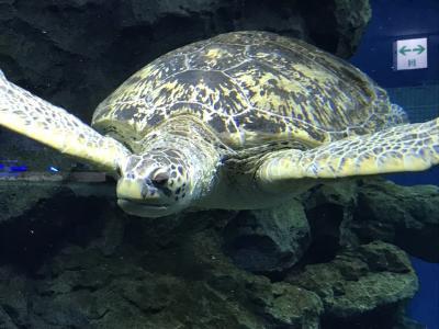 癒しの名古屋水族館