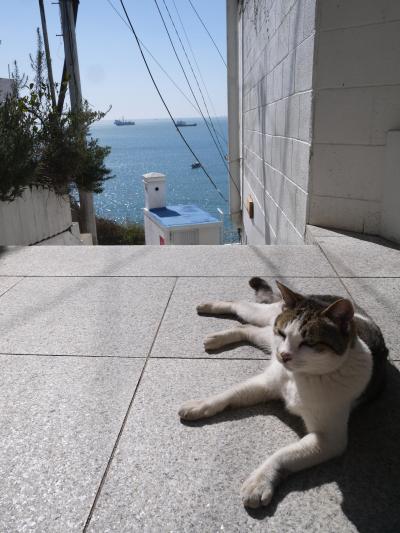 初めての釜山 青い海と空とにゃんこ