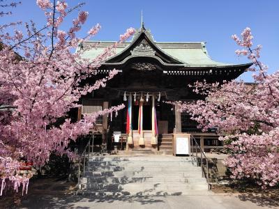 桜神宮とサザエさん通り