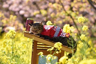 河津桜のピンクと菜の花の黄色が青空に映ぇ~!春はすぐそこ!でもやっぱり花より団子です(^^;