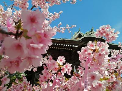 '20 東京御朱印さんぽ 桜新町(桜神宮~雪うさぎのかき氷)
