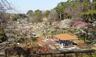 大倉山公園梅林 2020