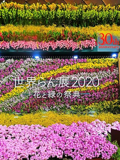 世界らん展-1 2020年:開催30回目 ☆オ-キッド ゲート・~桜蘭(おうらん)~展示