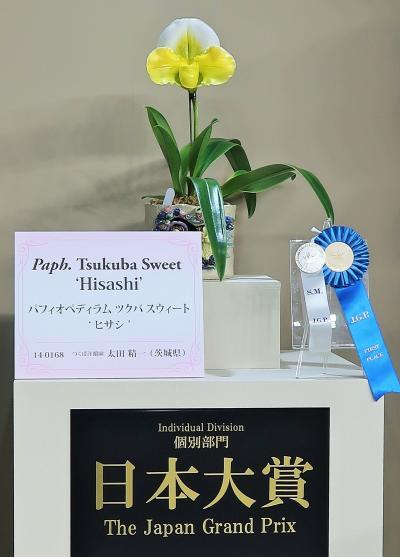世界らん展-2 日本大賞:ツクバ スウィート 'ヒサシ' ☆つくば洋蘭園-大谷さん作品に