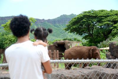 【1歳&3歳】初めての子連れハワイ⑦ - KCCファーマーズマーケットからホノルル動物園 -