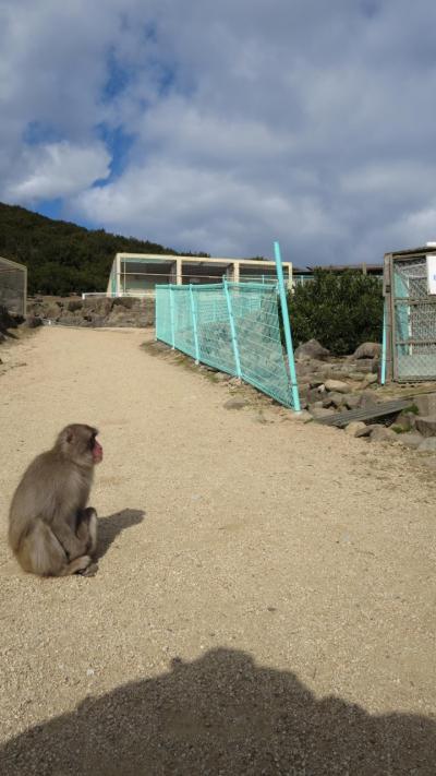 小豆島のサル山で初詣をする旅(2020.1.5)