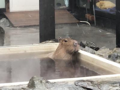 2020.02 繁忙期のストレス解消PART2…カピバラの湯姫ちゃんの入浴シーンが見られる「石狩温泉 番屋の湯」