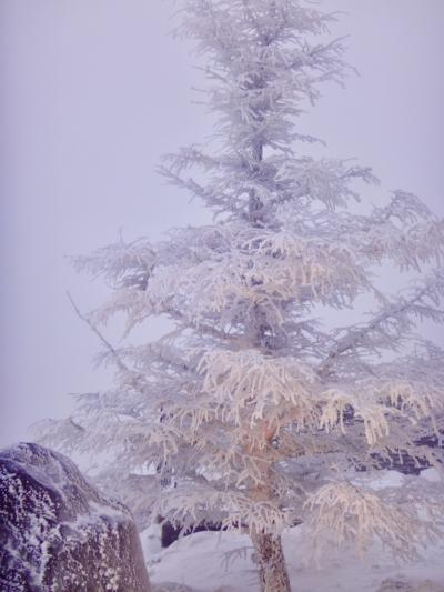 寒っ!真冬の美ヶ原 霧氷、樹霜が観られた!