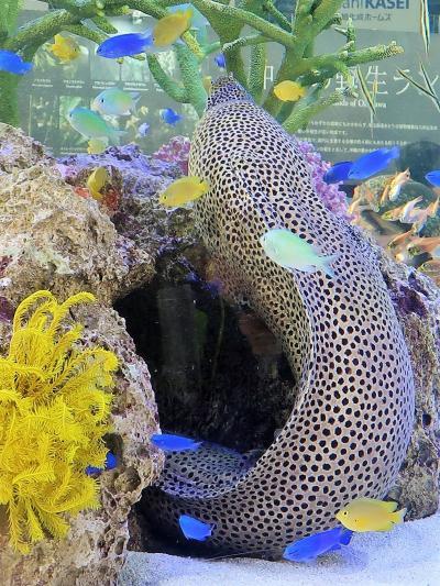 世界らん展15 沖縄:野生ランの宝庫-120種 ☆~美ら海水槽-熱帯魚/サンゴ礁~癒されて