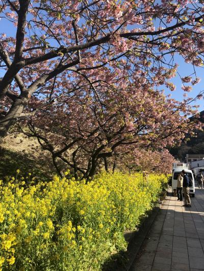 つるし雛を見に行こう。そしてちょこっと桜もね。ちょっとドキドキの一人旅②