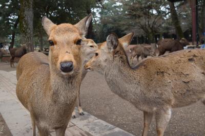 ヒトリナラ2020.02④ 奈良ホテル探訪(少し)と大安寺に古墳ケーキ篇