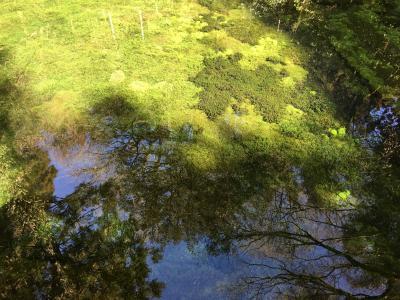美味しい水みつけ旅 ー 池山水源 ー