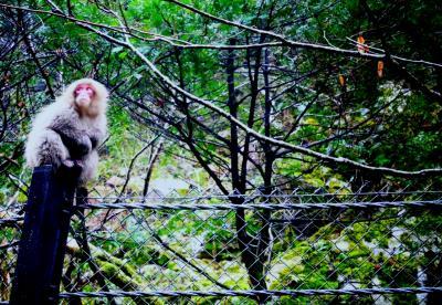 滝。猿。温泉。〆砂丘。岡山、鳥取。湯原温泉編