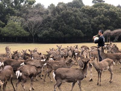 2020.2 3年半ぶりの微熟女旅in奈良③…奈良と言えばやっぱり鹿?鹿寄せ、春鹿、鹿に酔う
