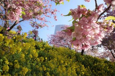松田山の桜まつりと高松山登山