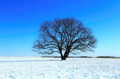 冬の十勝も魅力満載 (2)幸福駅のキハ22とハルニレの木