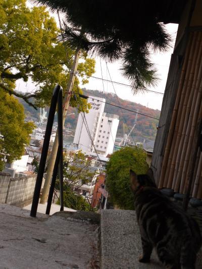 2019年12月 忘年会だ!尾道に集まれ(´▽`)ノ(2)ひたすら歩き回る坂の町【坂と路地とそして猫】