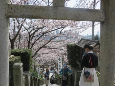 春の神戸と有馬温泉(13)北野天満神社の桜