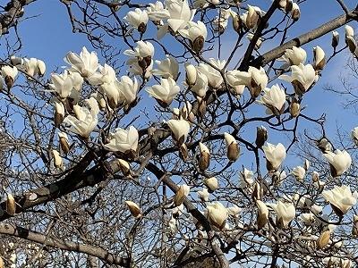 春うらら 近場で散策 春見つけ