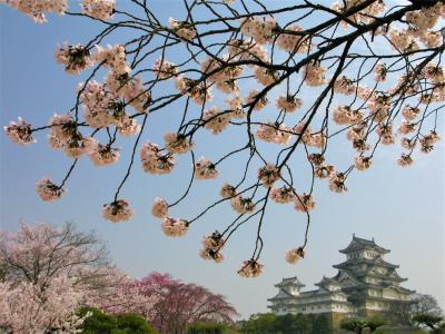 【2010年4月】結婚式にお呼ばれ。ちょうどよい機会なので桜を見に行った(1)兵庫編