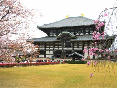 【2010年4月】結婚式にお呼ばれ。ちょうど良い機会なので桜を見に行った(2)大阪、奈良編