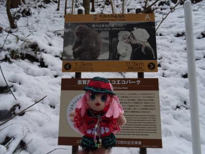 湯めぐりチャレンジ! 信州の温泉猿に会いに行くヨ! スノーモンキー編