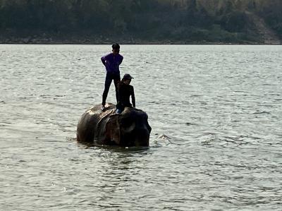 ルアンパバンに魅せられて クアンシーの滝と象乗りの現地ツアーではらわたが煮えくりかえった!