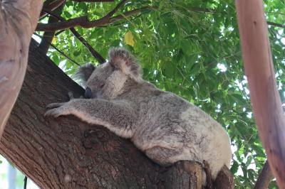 初めての南半球 オーストラリア・シドニーへの旅6日間 その4(フェザーデール動物園~クルーズ)
