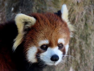 のいち動物公園&わんぱーくこうち 四国遠征最終日 美しき母娘とラブラブなベテランペア@のいち 日本一美しいタヌキに会いに@わんぱーく