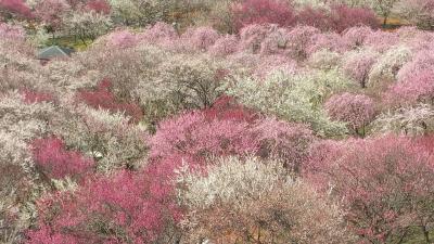 梅をもとめて三重 日帰りの旅(いなべと鈴鹿の森庭園)