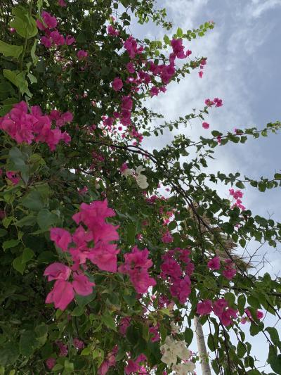 2020年1月バリ島旅行記⑦サヌール2日目