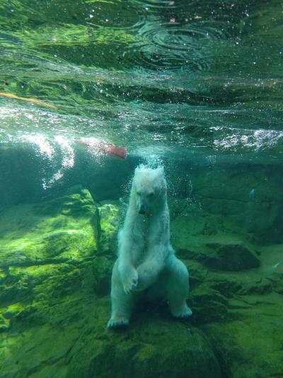 仙台・松島への旅③ 八木山動物園でリフレッシュ
