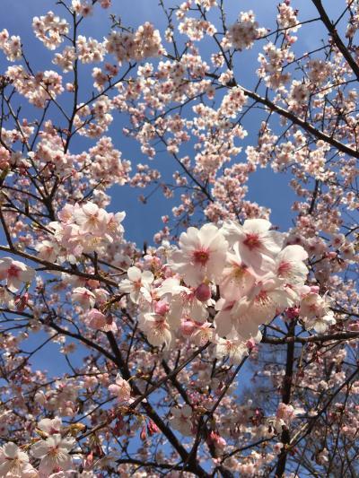 梅を見に小金井公園へ
