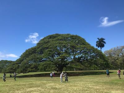 アラフィフ女子旅2019  今年もJALマイルでハワイ③ ジャルパック(JALOALO)で島内観光・この木なんの木気になる木編