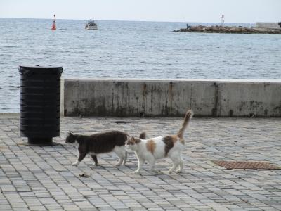 至福の猫三昧 (=^・^=) キプロス島 2020・冬 その4
