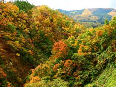 秋の長井ダムと大沼の浮島