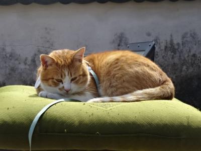猫城主に会いにゆきます、日本三大山城備中松山城