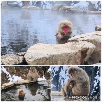 雪の遣いが往く北信の旅 その⑥ 完結! 子猿が可愛い!地獄谷野猿公苑~帰路
