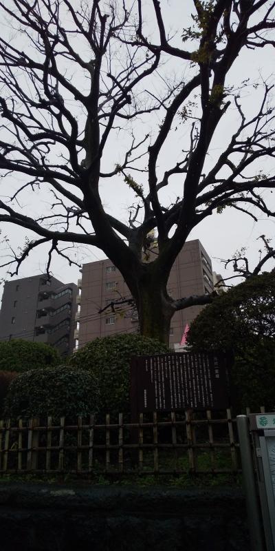 2-旧中山道 板橋宿~浦和駅(3/10 14km 26500歩 )